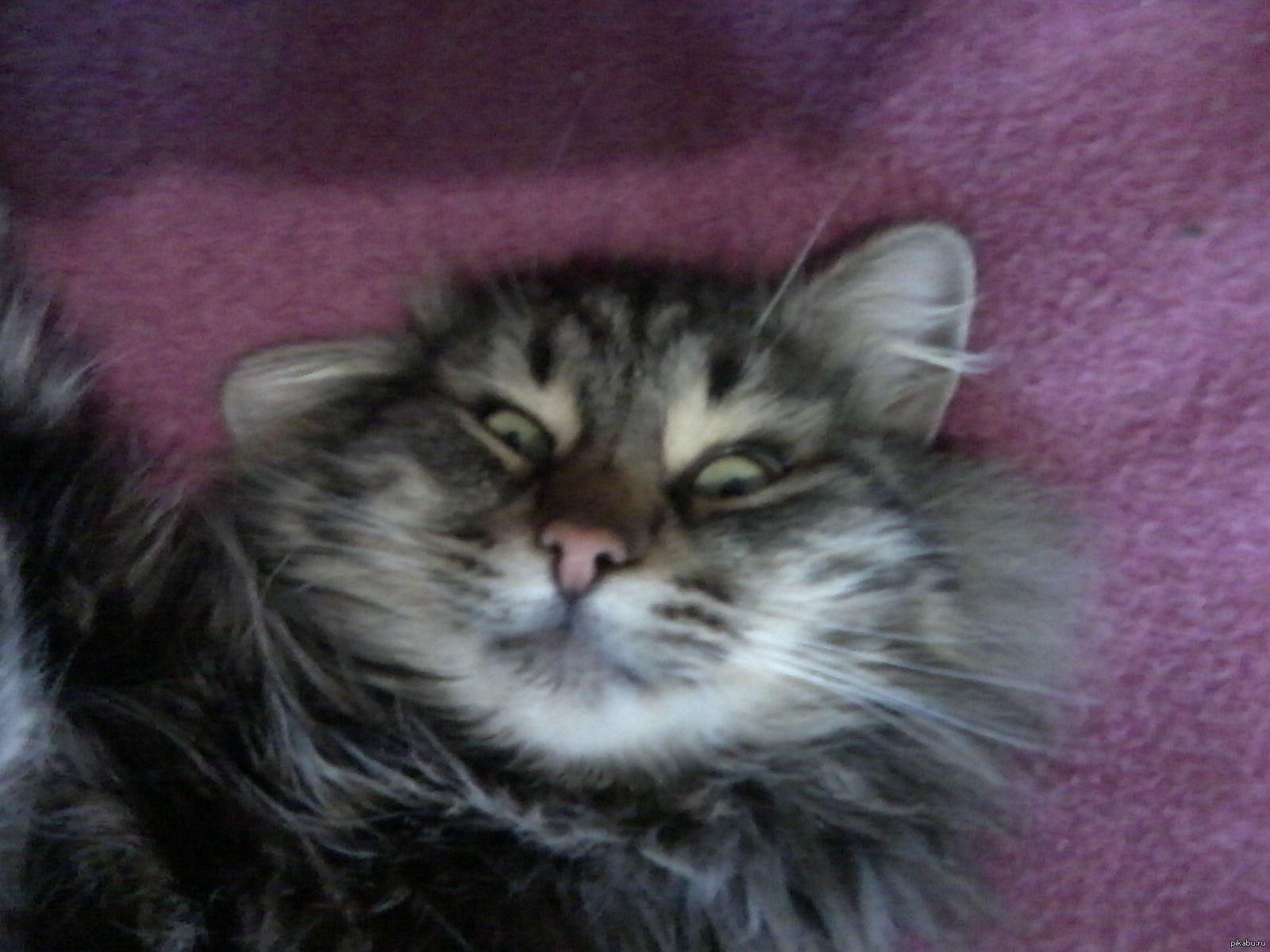 побережью средиземного невыспавшийся кот фото словами, возвести