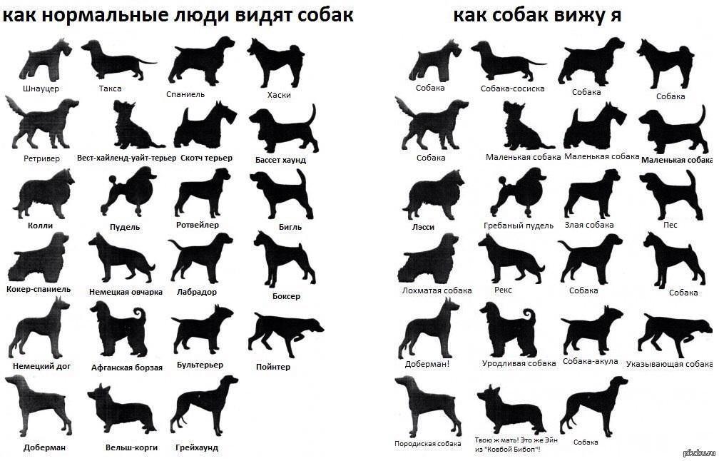 сколько собак на картинке отель