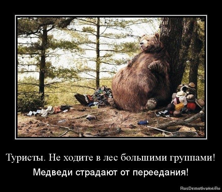 Картинка про медведей ты стряхивай а не теребонькай
