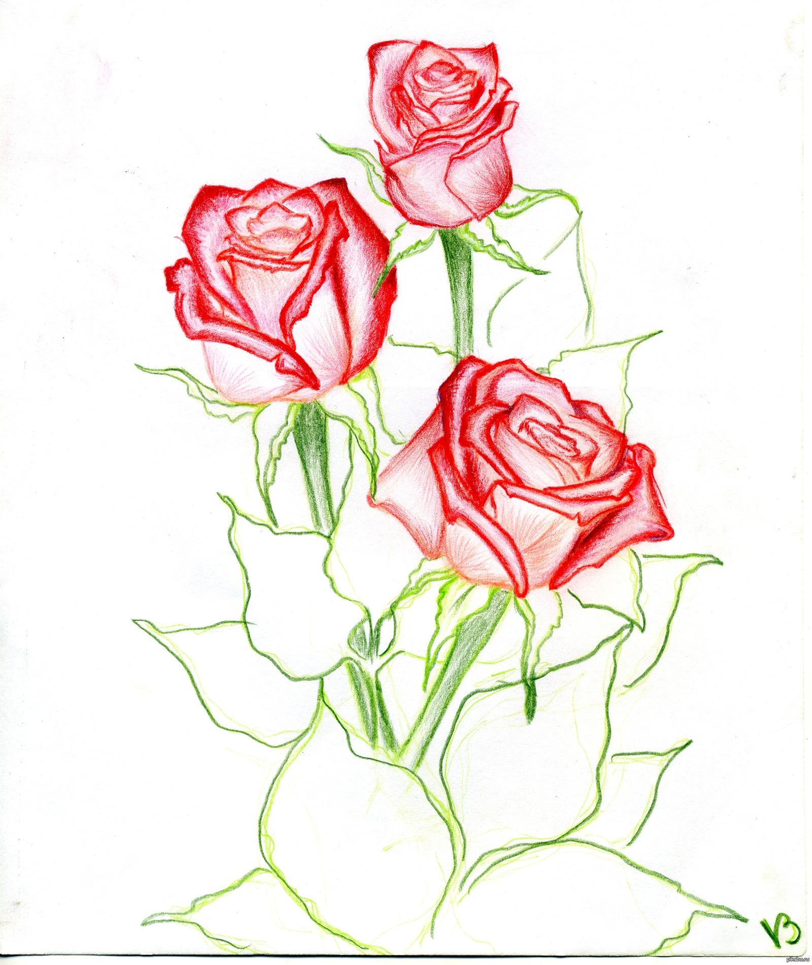 что рисовать рисунки розы очень даже немалы