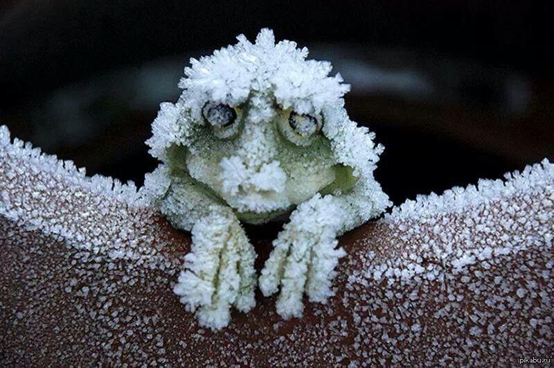 Смешные картинки про замерзших